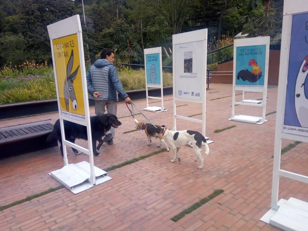 http://www.participacionbogota.gov.co/capital-animal-2018